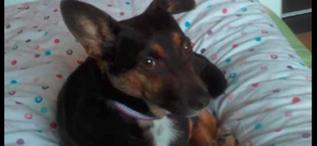 Chłopczyk w drodze na wakacje stracił na wieczność mamę i siostrę. Jego ukochanego psa szukała cała Polska