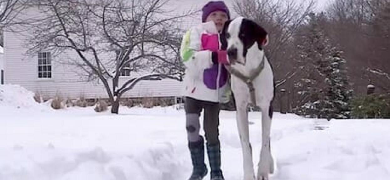 """Pies olbrzym pomógł dziewczynce ponownie zacząć chodzić. Zorganizowali mu """"najlepszy dzień w życiu psa"""""""