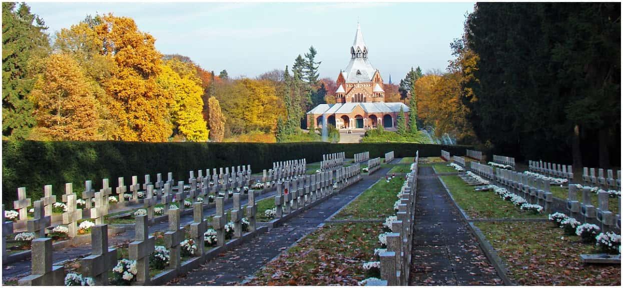 Przez egzotycznego intruza służby musiały zamknąć bramy cmentarza. Mieszkańcy Szczecina przecierali oczy