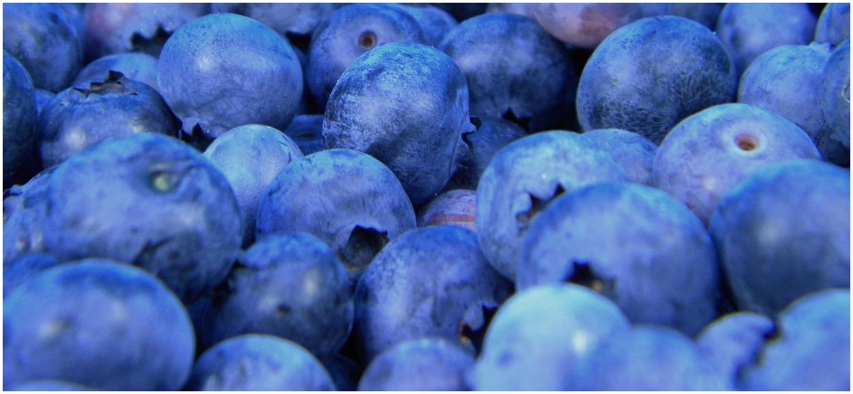 GIS podnosi alarm. Uważajcie na tasiemca w popularnych owocach, to może skończyć się nawet śmiercią