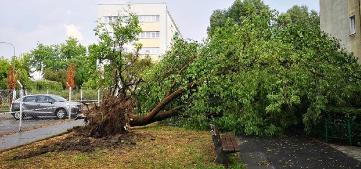 """Widok jak po kataklizmie. """"Wet microburst"""" uderzył w Warszawę"""