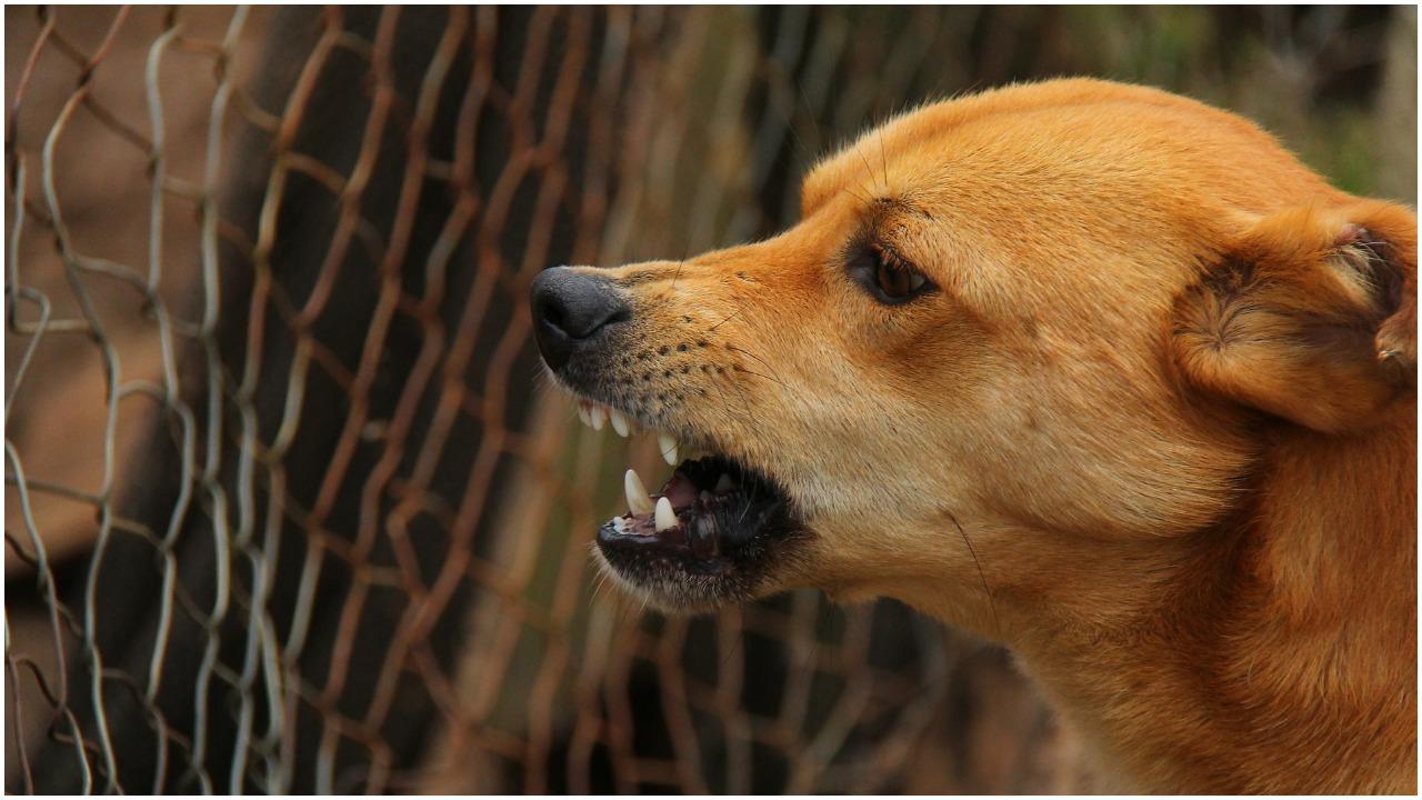 """Wyznaczono teren zagrożony wścieklizną w Warszawie! """"Bezwzględny zakaz przemieszczania psów i kotów"""""""