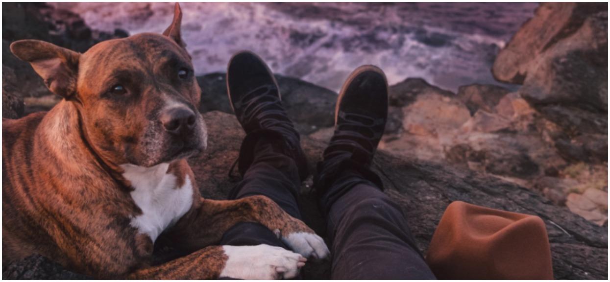 Córka pozwoliła ojcu opiekować się psem przez weekend. Pisał jej wiadomości, które nawet nie przyszłyby wam do głowy