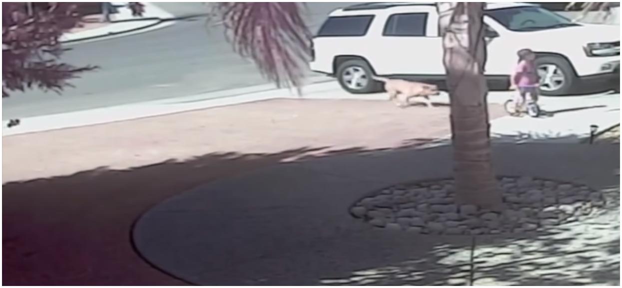 Pies rzucił się na małe dziecko. Gdy zobaczył to kot, natychmiast ruszył na pomoc