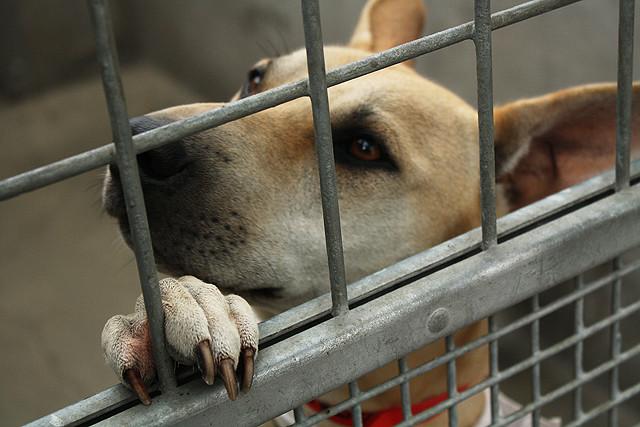 Latami szukał zaginionego psa, zwierzak cierpiał w schronisku. Nagle wyczuł znajomy zapach i oszalał z radości