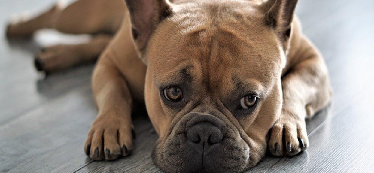 Mamę obudziło dziwne zachowanie psa. Kiedy za nim poszła, aż zamarła