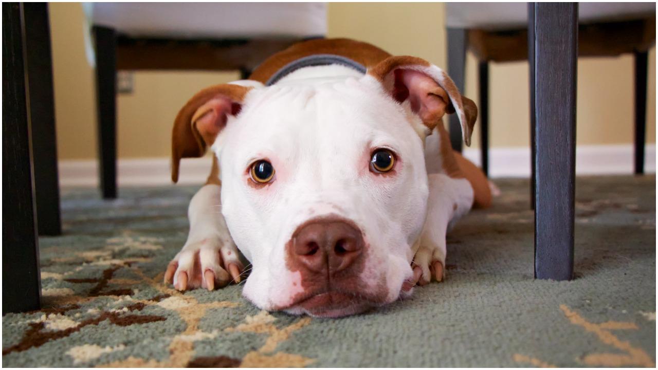 Pies dziękuje weterynarzowi za wyleczenie poparzonego ciała. Nagranie ściska za gardło
