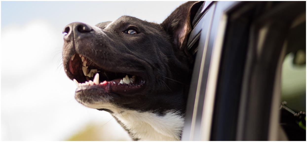 Podróżujesz z psem? Oto 10 rzeczy, które koniecznie trzeba wiedzieć
