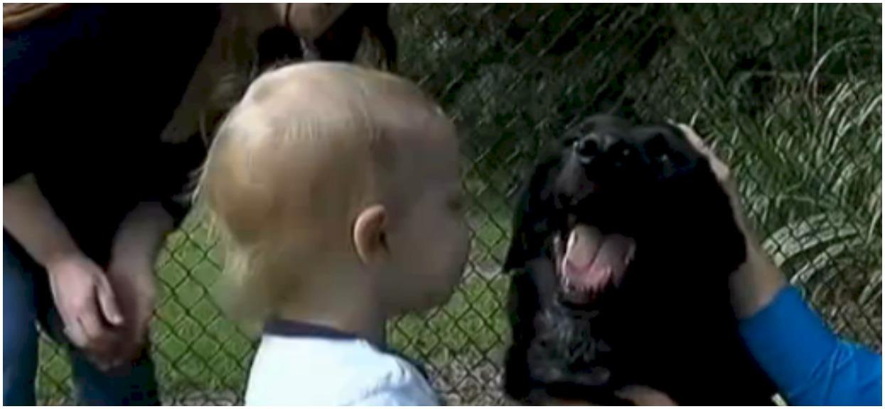 Opiekunka znęcała się nad kilkumiesięcznym dzieckiem. Wtedy pies postanowił zrobić coś, żeby mu pomóc