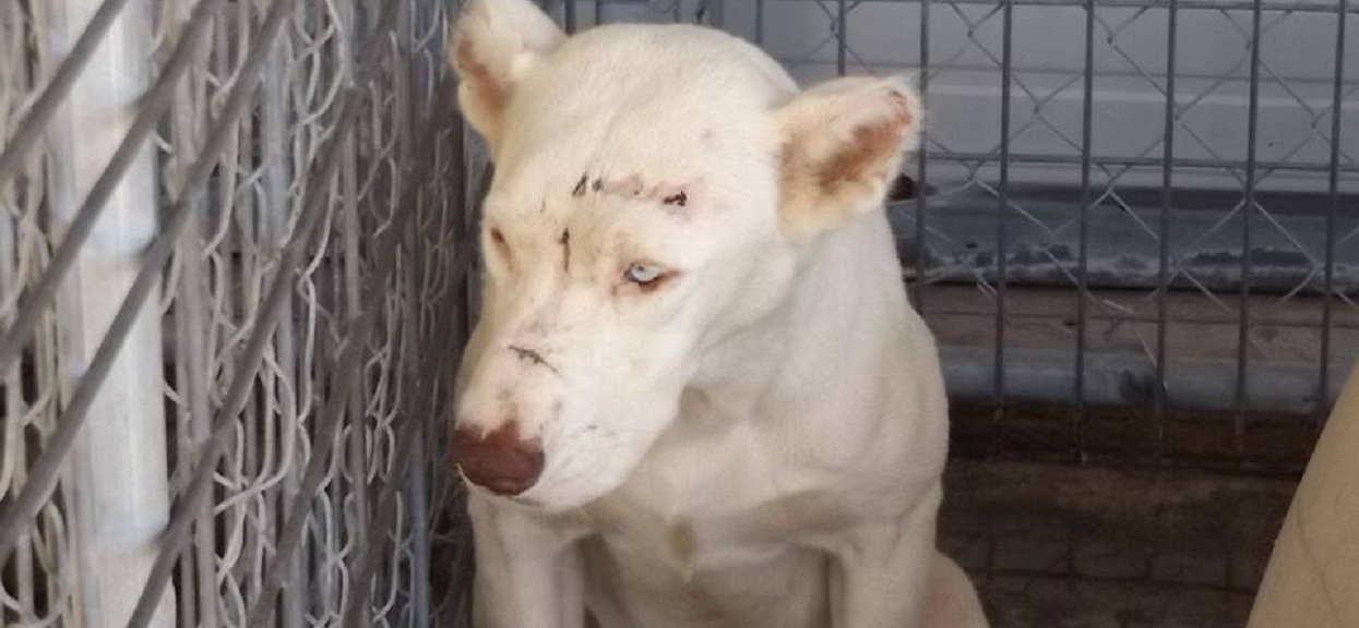 Wzięła psa ze schroniska. Pierwszej nocy, gdy się obudziła i na niego spojrzała, zalała się łzami
