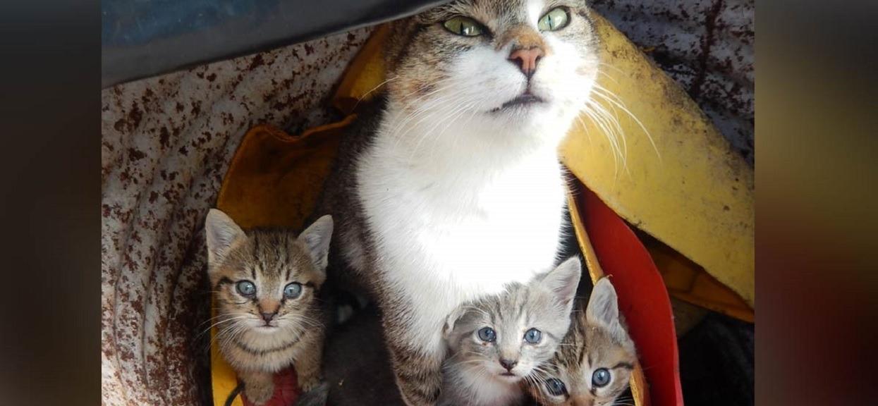 Babcia wzięła kota do weterynarza, bo ponoć co miesiąc rodził młode. Rozwiązanie zagadki jest niesamowite