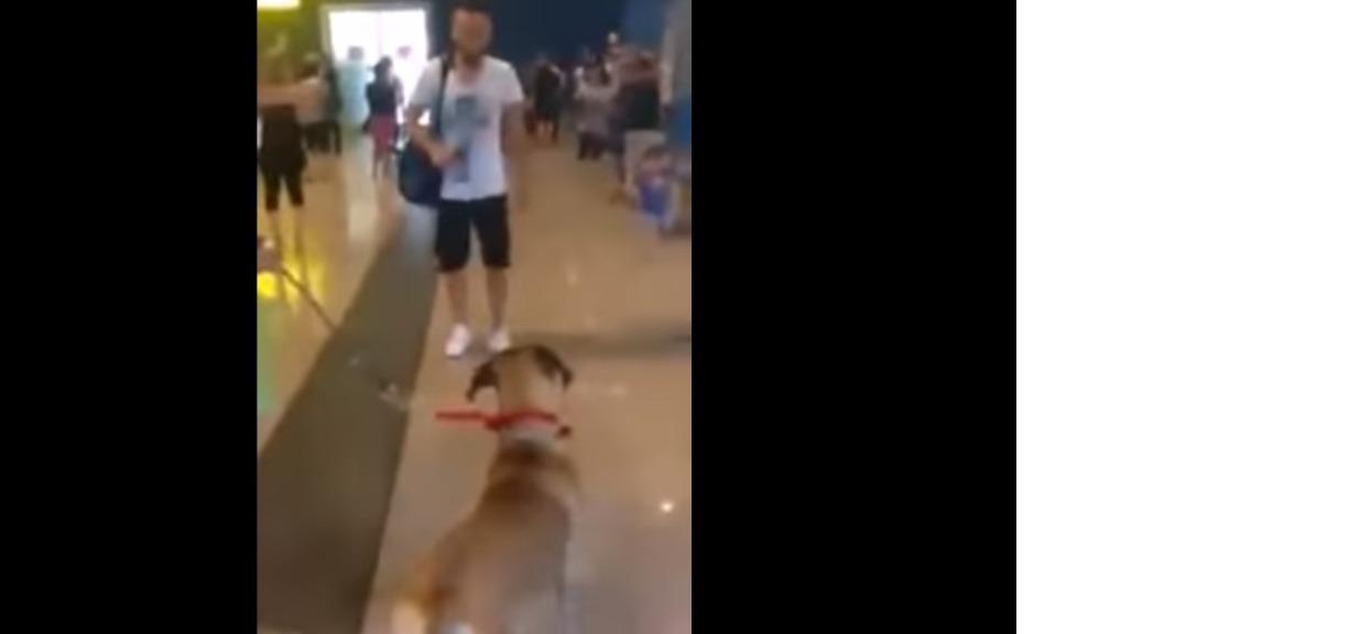 Gdy po 3 latach rozłąki zobaczył swojego pana, stanął w bezruchu. Po chwili pies totalnie oszalał
