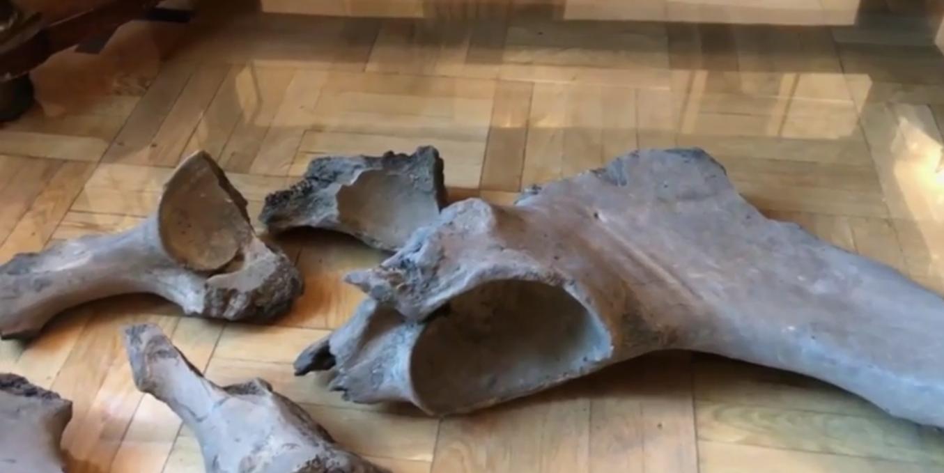 Podczas budowy II linii metra odkopano bardzo stare szczątki. Już wiadomo, do kogo należały