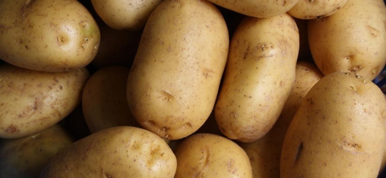 Nigdy nie jedz tak wyglądających ziemniaków. Zawierają groźną toksynę