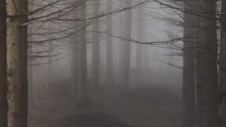 70-letni mąż ze Śląska przypadkiem zabił żonę podczas wyprawy do lasu. Sekcja zwłok ma wykazać prawdę