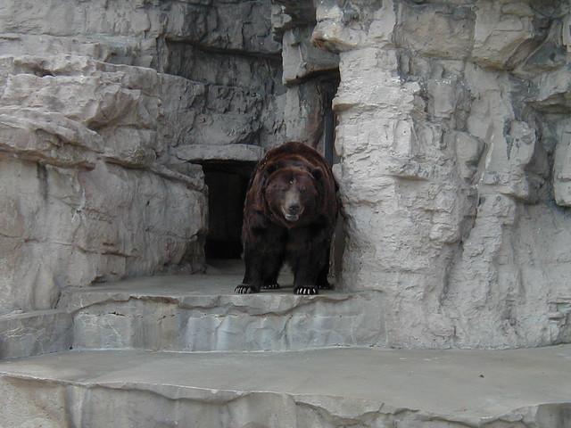 Niedźwiedź zaatakował i zaciągnął Aleksandra do jaskini. Po miesiącu został znaleziony, wszyscy myśleli, że nie żyje. Nagle otworzył oczy