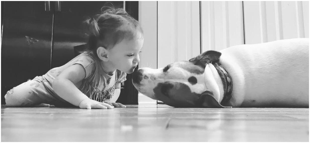 Adoptowali szczeniaka, który wyrósł na niesamowitego psa. Gdy zostawili pod jego opieką noworodka, zwierzak zmienił się całkowicie