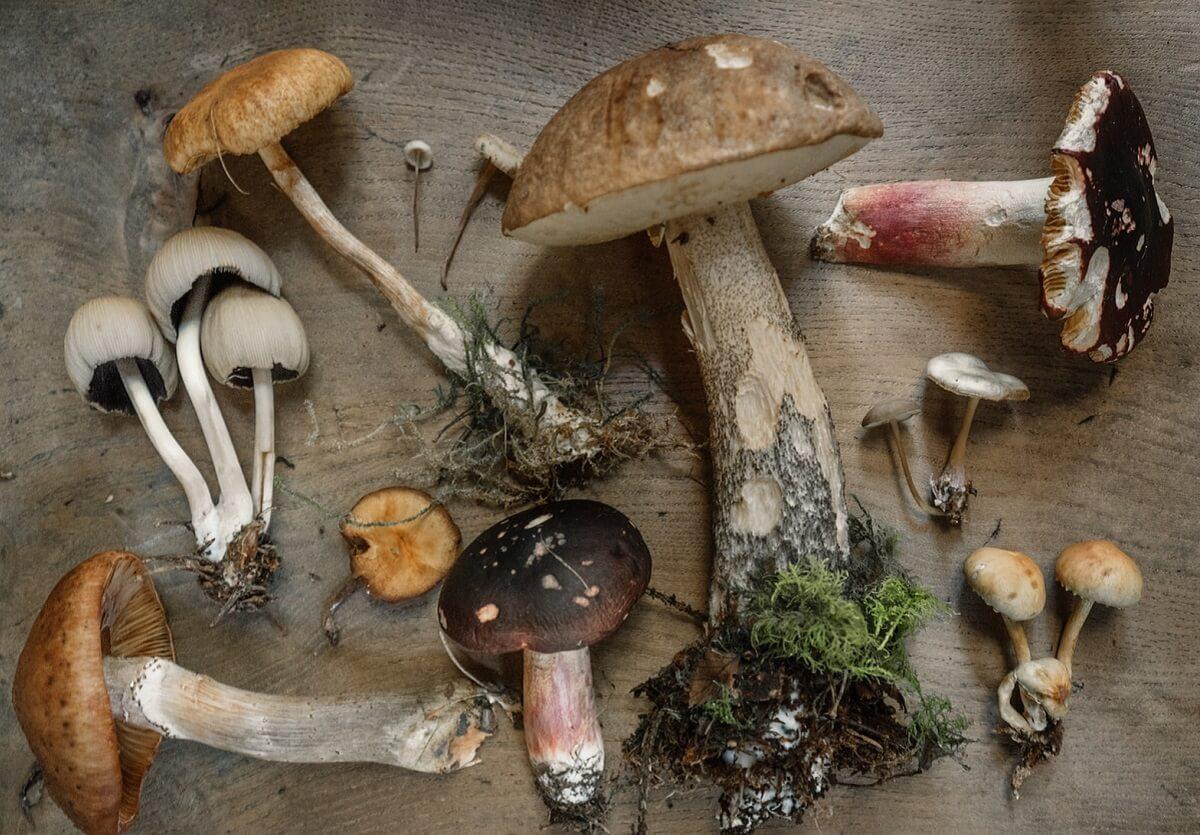 Za zbieranie grzybów możesz dostać aż 500 zł mandatu. 3 przypadki, za które grozi grzywna