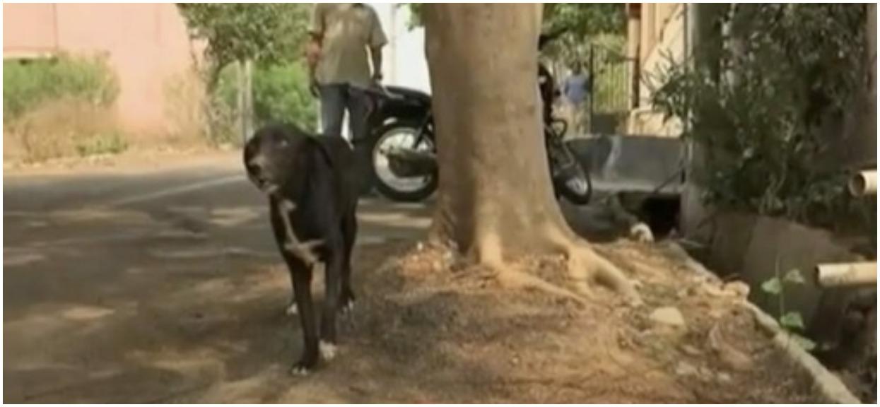 """Kobieta zabiła 8 szczeniąt na oczach psiej matki. W ten sposób chciała dać jej """"ważną"""" nauczkę"""