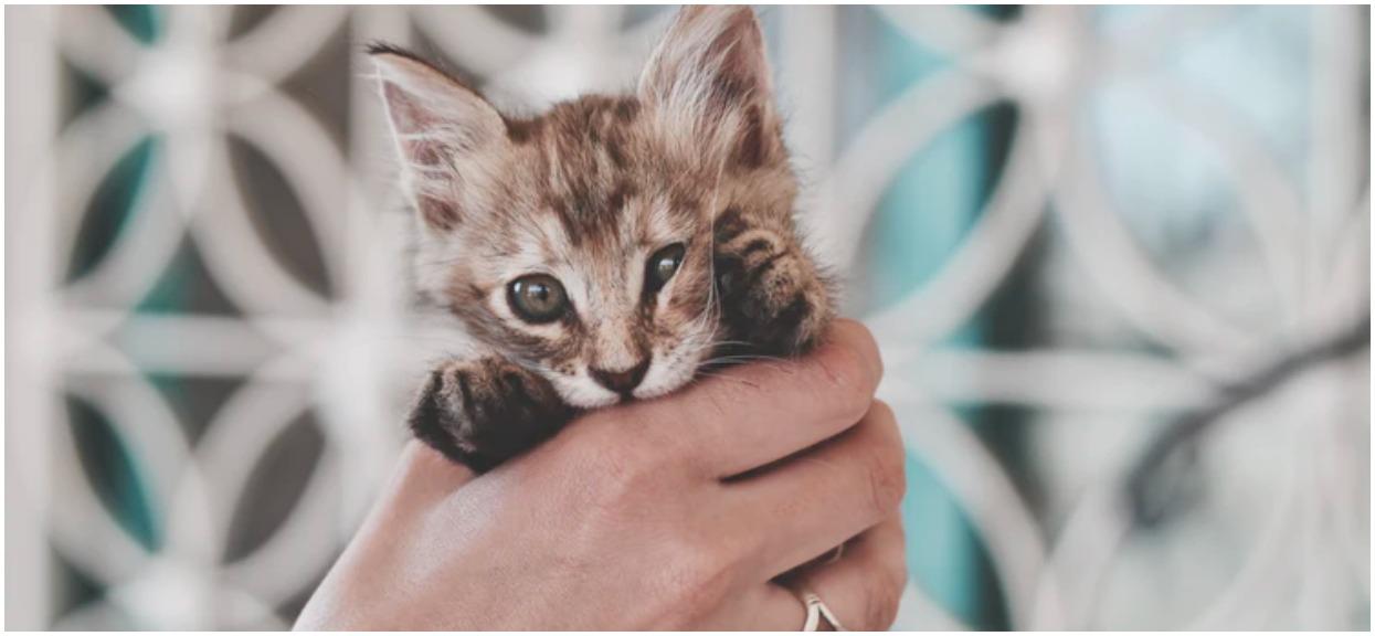 Cała prawda o kotach wyszła na jaw. 2/3 właścicieli będzie bardzo szczęśliwa, pozostali mają pecha
