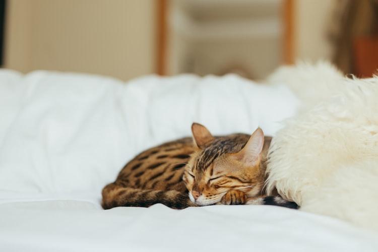 Kot śpi z Tobą w łóżku? Mamy dla Ciebie ważną informację