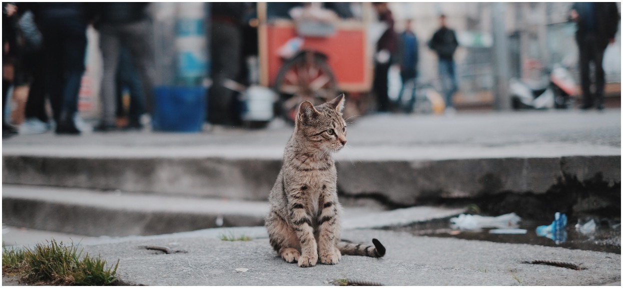Najwyżej dwa koty i godzina policyjna dla zwierząt. Nowe przepisy już od nowego roku