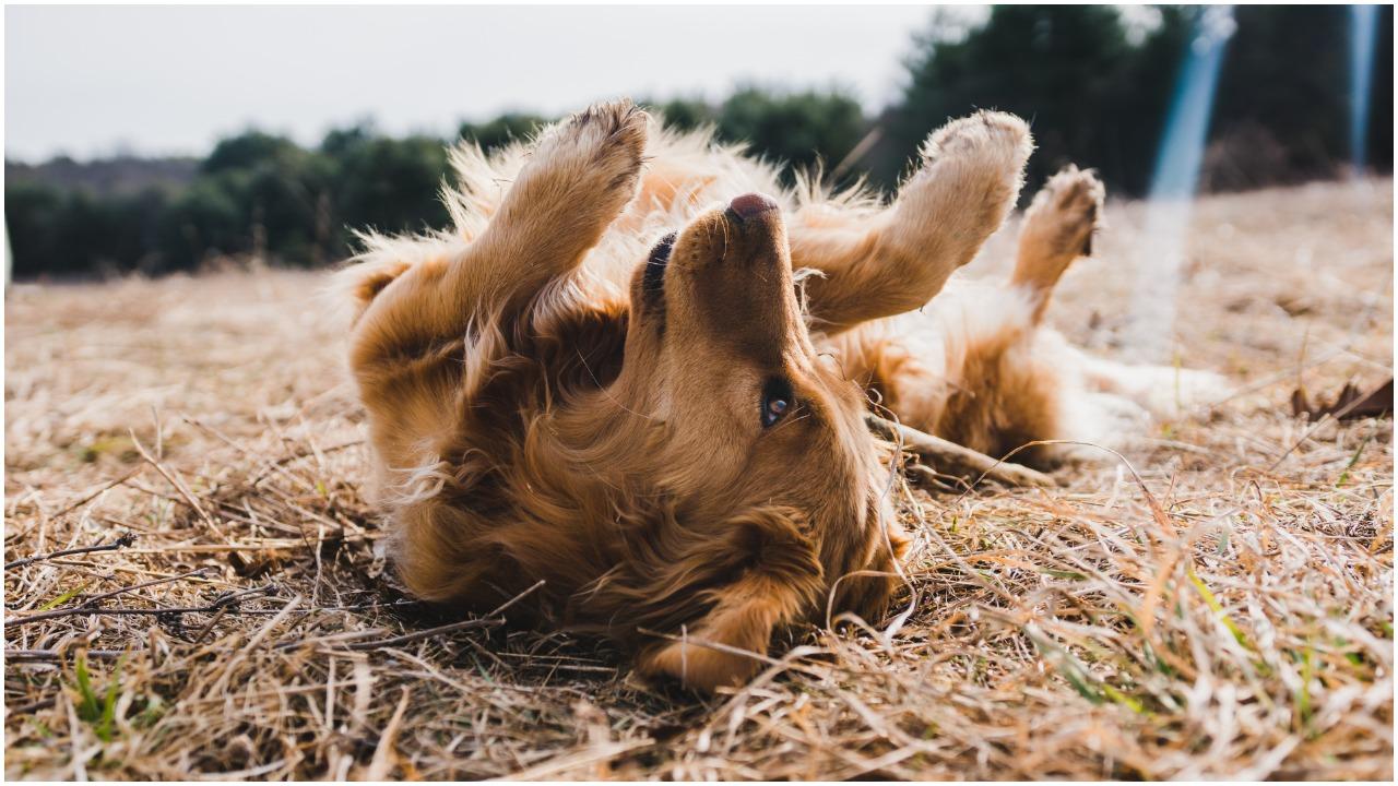 Tajemnicza choroba zaatakowała. Dziesiątki psów umierają w ciągu kilku dni, lekarze nie mają pojęcia co się dzieje