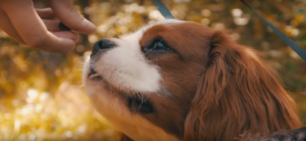 Sąsiedzi skarżyli, że jego pies nie daje im żyć, gdy nie ma go w domu. Właściciel zamontował kamerę, by przekonać się, co wyczynia zwierzak
