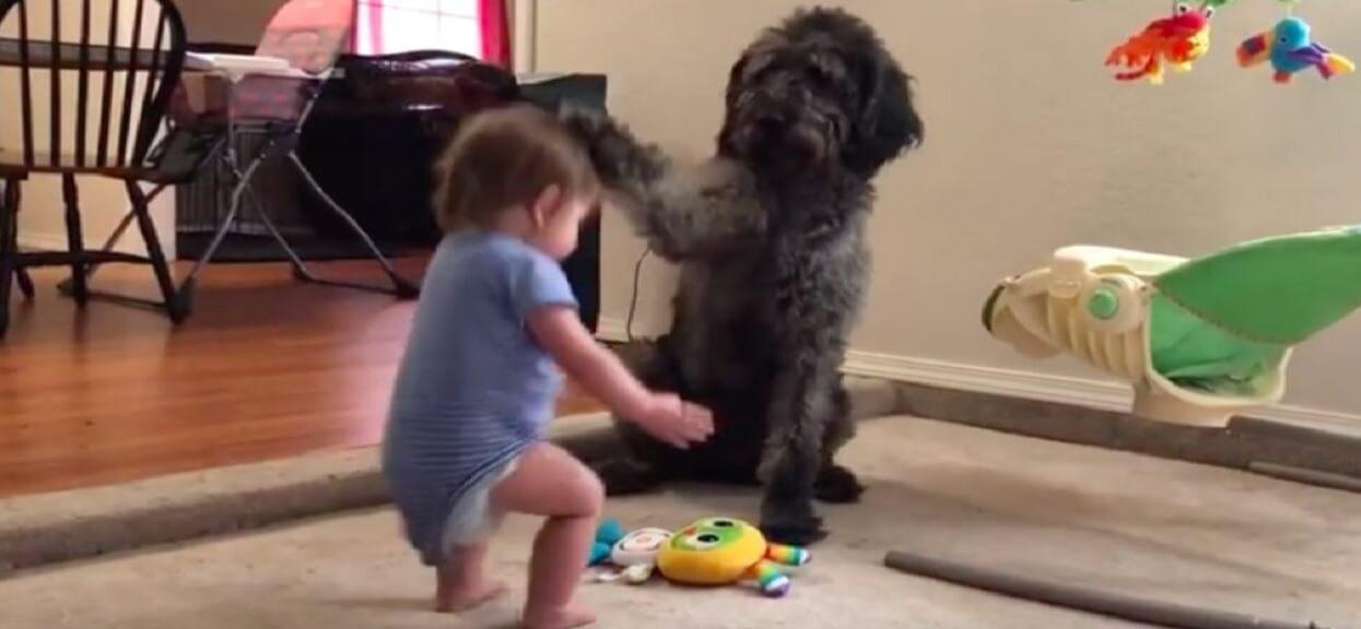 Rodzice byli zaskoczeni, kiedy zobaczyli, co pies robi z ich dzieckiem. Udało im się wszystko nagrać