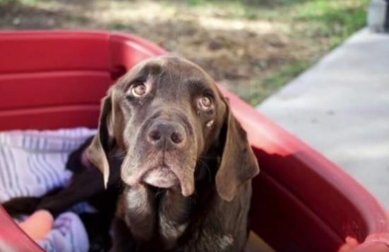 Pies zniknął bez śladu. Miesiąc później kolejny zwierzak tych samych właścicieli zaczął się dziwnie zachowywać i dotarli do strasznej prawdy