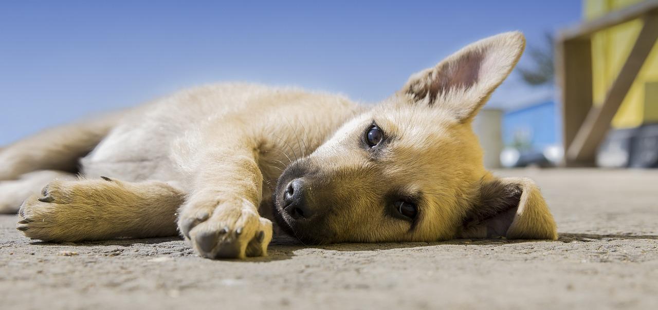 """Walił psem o ziemię, aż ten umarł. """"Jeśli wasze psy nie robią tego, co chcecie, to je zjedzcie"""""""