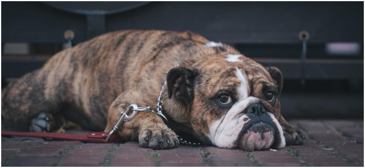 Pies od kilku dni nie chciał jeść, zaniepokojona właścicielka zabrała go do weterynarza. Badanie tomografem ujawniło straszną prawdę