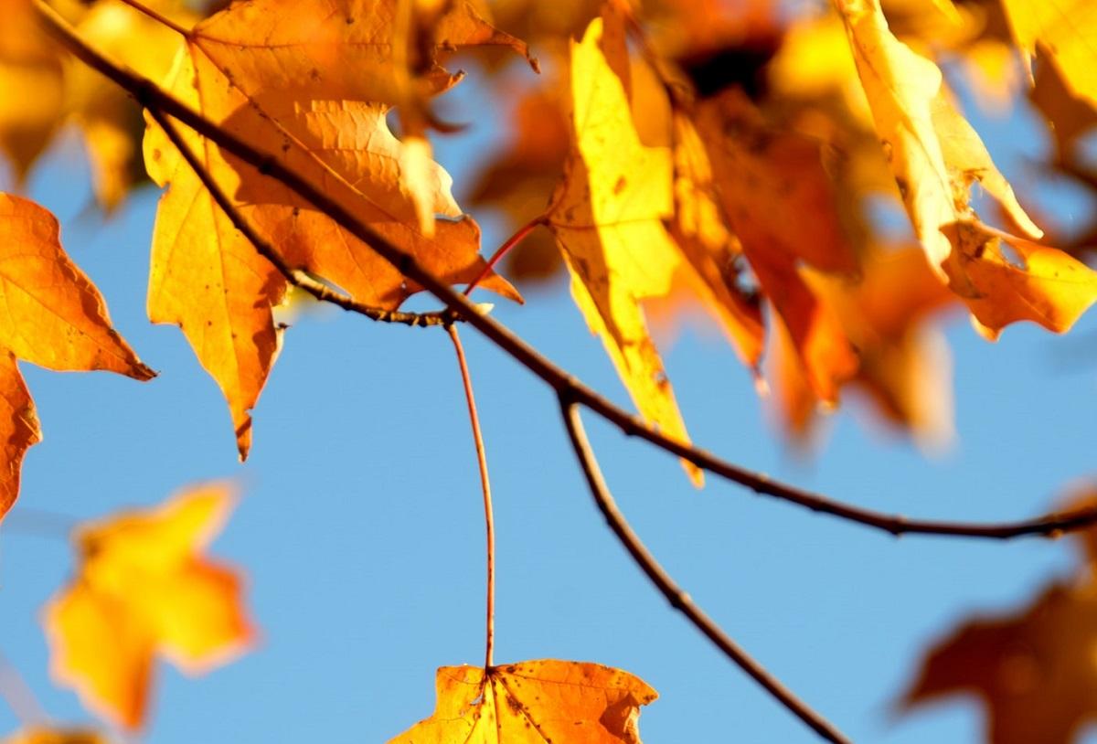 W tym roku nadejdzie jesień, jakiej się nie spodziewaliście. Dla wielu będzie to ogromne zaskoczenie