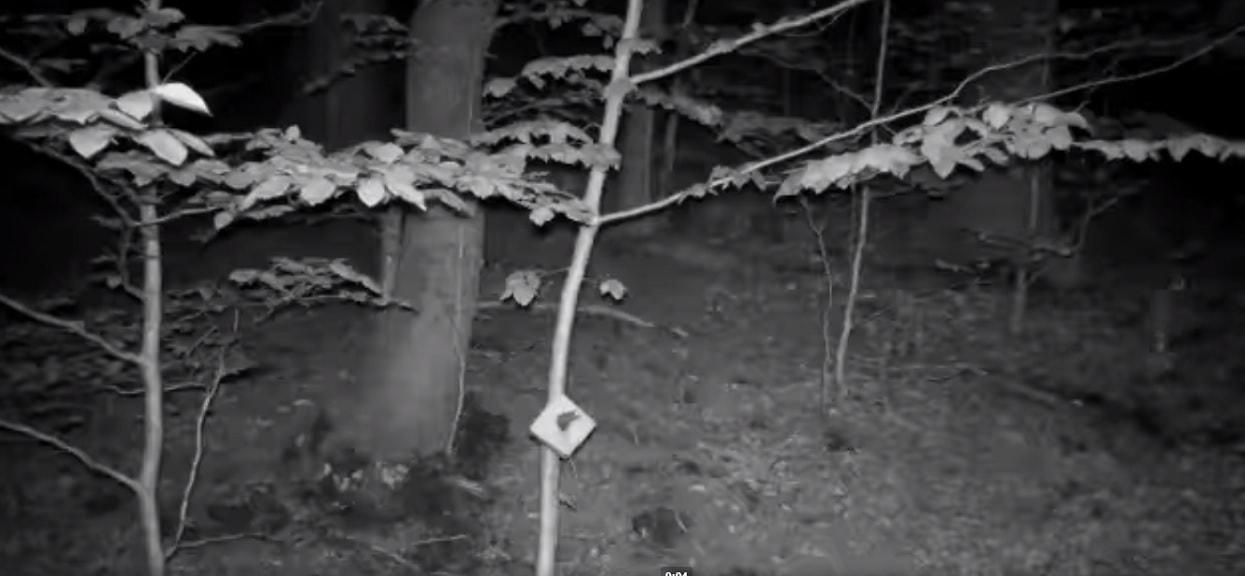 Usłyszeli pohukiwanie sowy i sprawdzili nagranie z kamery reagującej na ruch. Za pierwszym razem nic nie zauważyli, za drugim przeszły ich ciarki