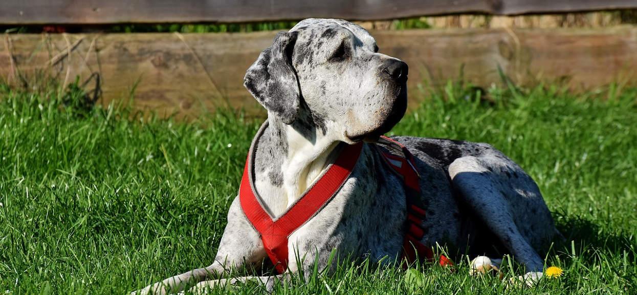 10-latek wyjaśnił weterynarzowi, dlaczego psy żyją krócej od ludzi. Teraz powtarza te słowa wszystkim, którzy rozpaczają po śmierci pupila