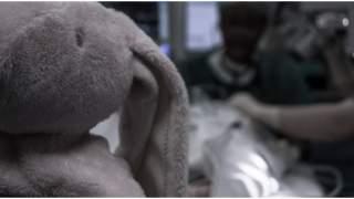 Mały chłopiec zjadł kotleta kupionego w Lidlu. Umierał w męczarniach przez 8 lat