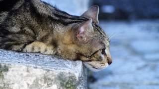Znalazł ledwo żywego kociaka na budowie, wziął go do domu. Nie spodziewał się, że dostanie aż dwa puchary