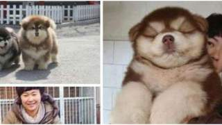 22 najbardziej niebywałe krzyżówki ras psów. W życiu nie widziałeś takich szczeniaków, to nie fotomontaż!