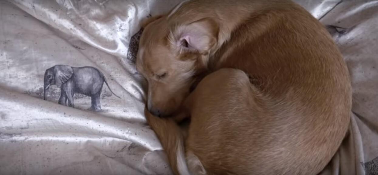 Bity i poniewierany od szczeniaka pies zostaje pogłaskany pierwszy raz w życiu. Reakcja zwierzaka rozrywa serce na miliard cząsteczek