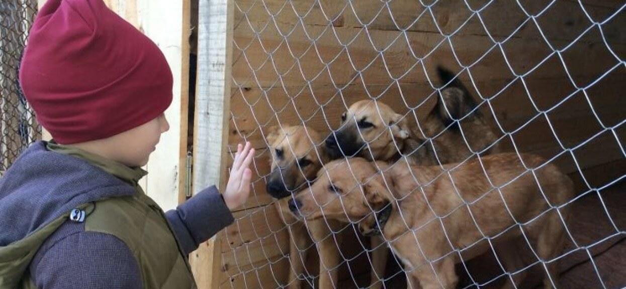 9-latek chciał pomóc głodnym, opuszczonym psom. Wpadł na genialny pomysł, który wyciska łzy z oczu