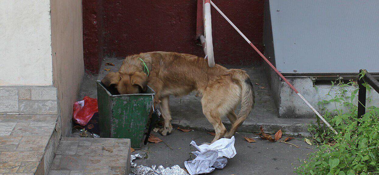 Dzień z życia bezdomnego psa. Nagranie rozdziera serce, taki widok ciężko wyrzucić z pamięci