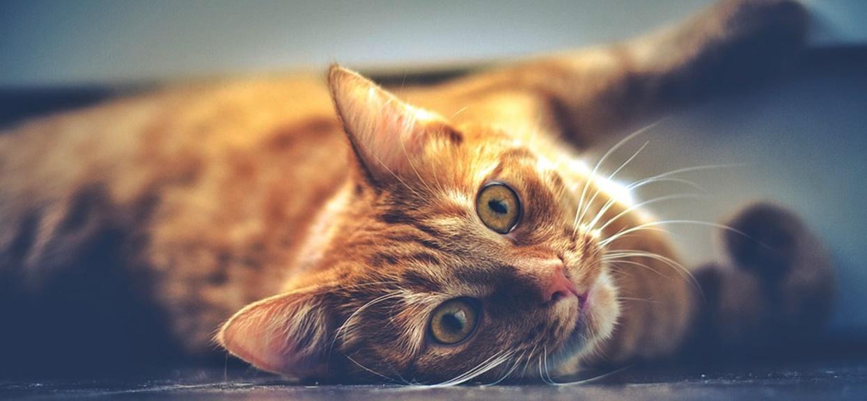 Imię dla kota