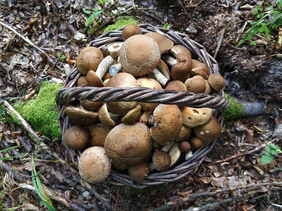 Justyna szukała grzybów w lesie. W ściółce zauważyła rzecz niepokojąco podobną do ludzkiego mózgu, natychmiast wyciągnęła telefon