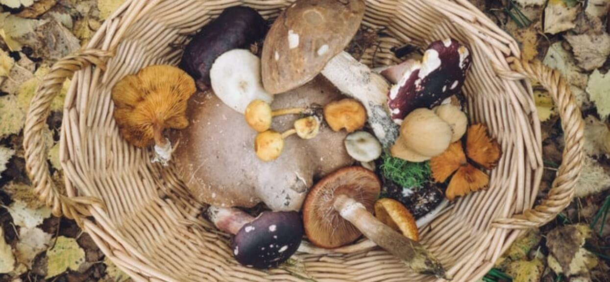 Trzeba uważać wchodząc do lasu. Kary za zbieranie grzybów sięgają 5 tysięcy złotych