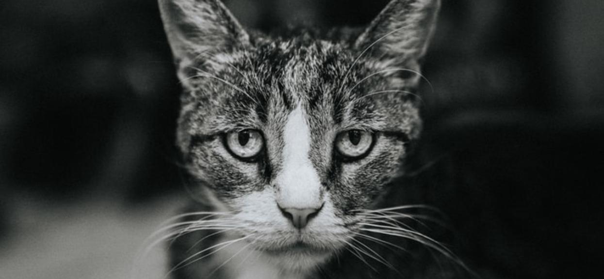 Kotu śmierdzi z pyszczka? To może być bardzo niebezpieczna choroba, wkrótce może go czekać kosztowne leczenie