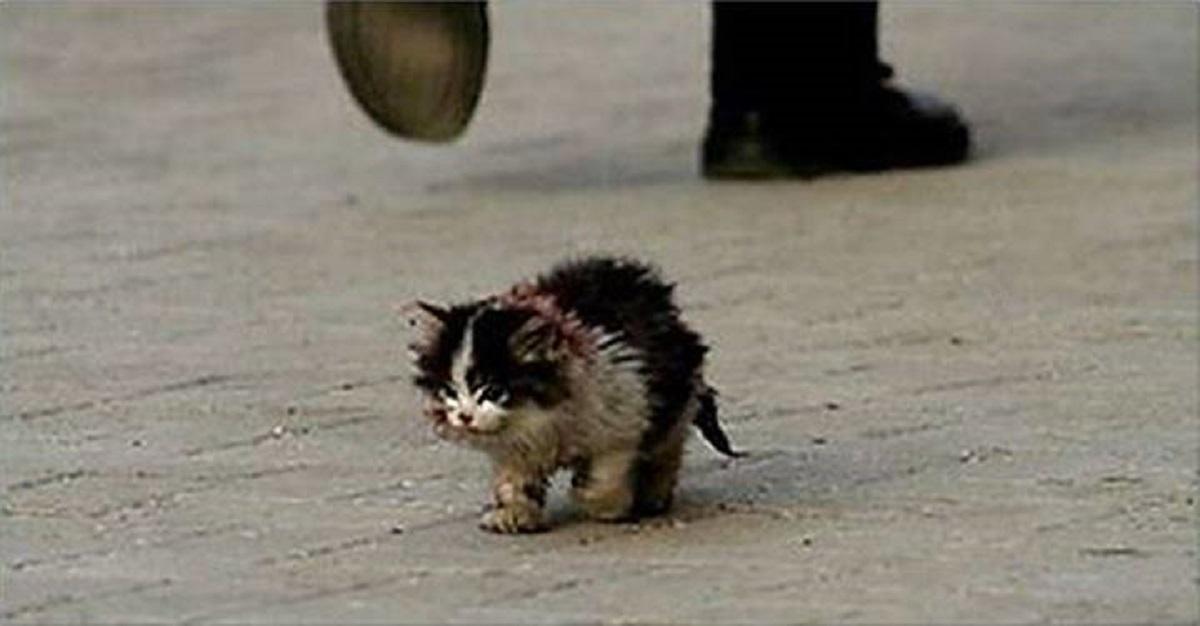 Każdy, kto zobaczył tego kota, brzydził się go dotknąć. Wziął go na ręce, ale nim doszedł z nim do domu zmarł, a w oczach mężczyzny pojawiły się łzy