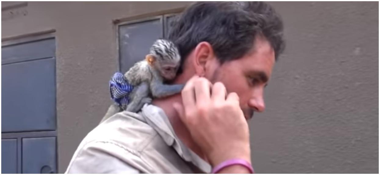 Uratował małpkę przed śmiercią w potwornych męczarniach. Nagrali, jak okazała mu wdzięczność, niebywałe