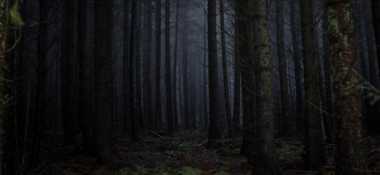Urodziła dziecko w łazience, później zabrała je do lasu. Kiedy po nie wróciła, wydarzyło się najgorsze; wiadomo, co się stało z 18-letnią mamą