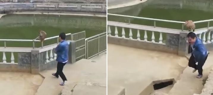 Mężczyzna wepchnął małpę w zoo do wody. Zemściła się tak, że aż oczy bolą od patrzenia, drastyczne nagranie