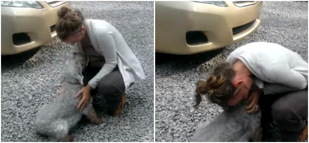 Pies zobaczył swoją właścicielkę po dwóch latach rozłąki. Jego reakcja jest rozbrajająca, wszystko się nagrało